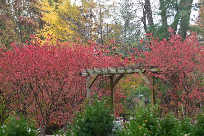 [Image: Spring, Summer, or Fall - we provide various colors of our foliage !!]