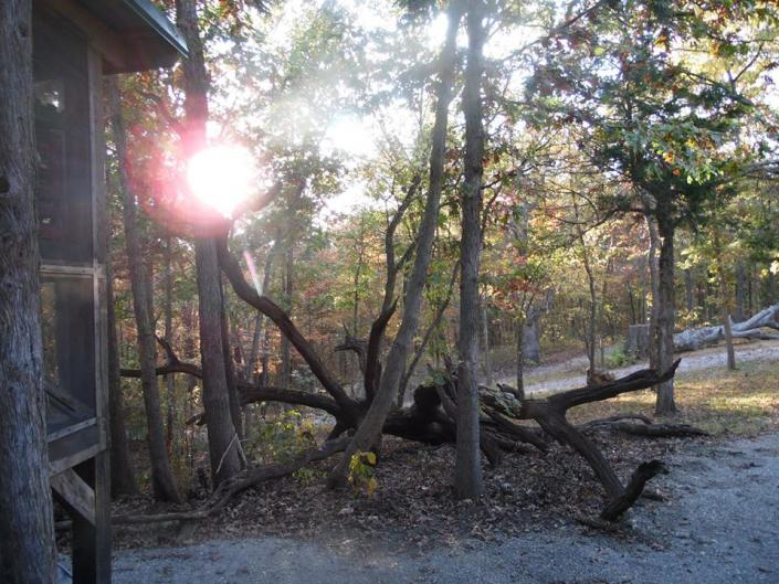[Image: Century old White Oak trees and upland forest provide an unbeatable location for your wedding.]